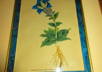 19th century botanical