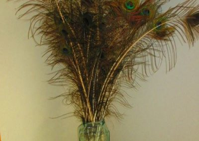 Large vase filled with peacock feathers