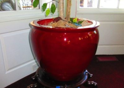 Oxblood coy bowl on stand